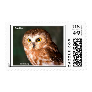 Saw Whet Owl Stamp