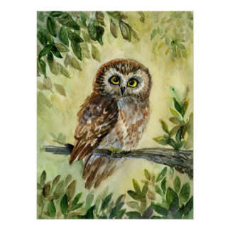 Saw whet  Owl watercolor Poster