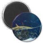 Sawfish (tiburón del carpintero) imanes de nevera