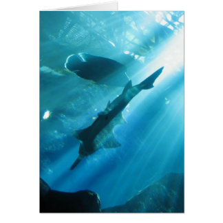 Sawfish & Wrasse in Blue Card