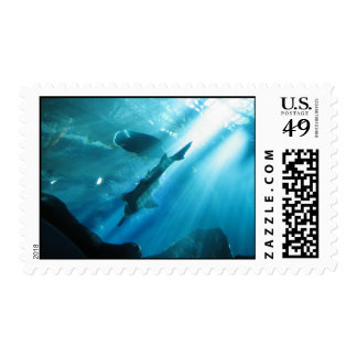 Sawfish y Wrasse en azul Envio