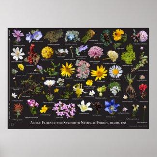Sawtooth Alpine Flora Poster