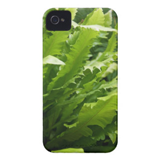 Sawtooth Kelp Fern iPhone 4 Barely There Case-Mate Case-Mate iPhone 4 Case