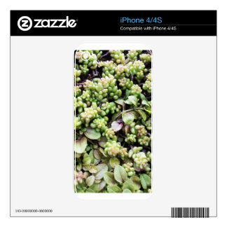 Saxifrage Photo Gift iPhone 4S Skins