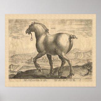 Saxon Stallion Antique Horse Engraving Posters