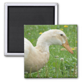 Saxony Duck Magnet