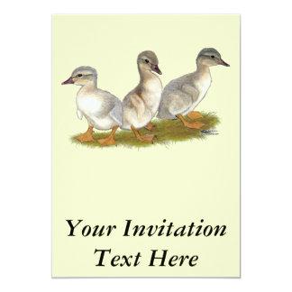 Saxony Ducklings Card