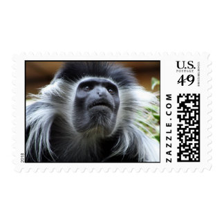 Say Cheese Postage Stamps