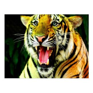 Say love loud Tiger Postcard