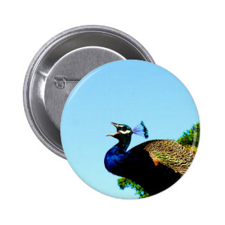 Say love to you pavo cristatus peacock pinback buttons