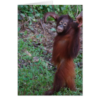Say No to Bullies with Krista Orangutan Card