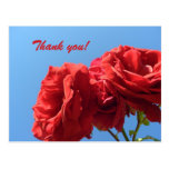 Say Thank you with pink roses Post Cards