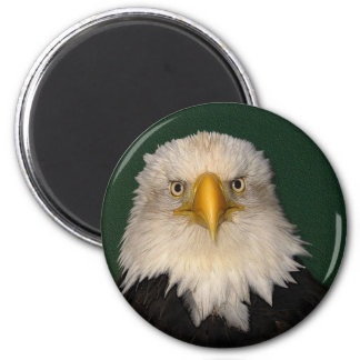 """""""SAY WHAT?"""" Bald Eagle Magnet"""