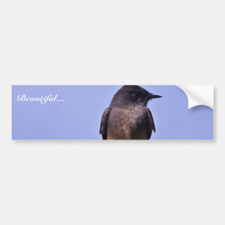Say's Phoebe Bumper Sticker