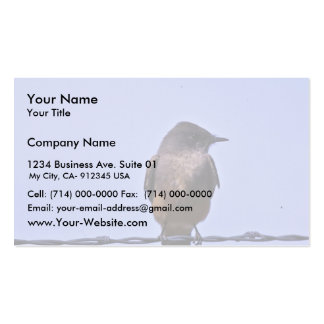 Say's Phoebe Business Card