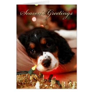 sazona el perro de aguas de saltador de los greeti tarjeta de felicitación