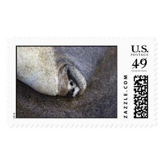 sazonado sello