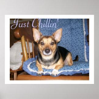 Sazone el poster de Chillin con pimienta del perro