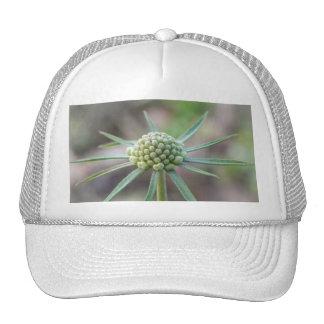 Scabiosa Bud Trucker Hat
