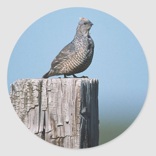 Scaled Quail Classic Round Sticker