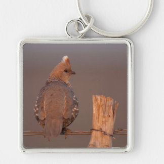 Scaled Quail on a barbwire fence near wood post Silver-Colored Square Keychain