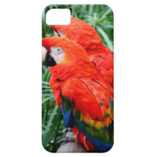 Scalet Macaw iPhone 5 Cases