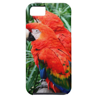 Scalet Macaw iPhone 5 Case