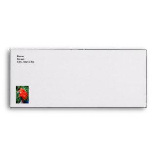 Scalet Macaw Envelope