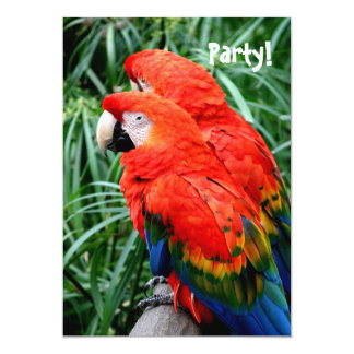 Scalet Macaw 5x7 Paper Invitation Card