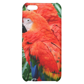 Scalet Macaw iPhone 5C Cover