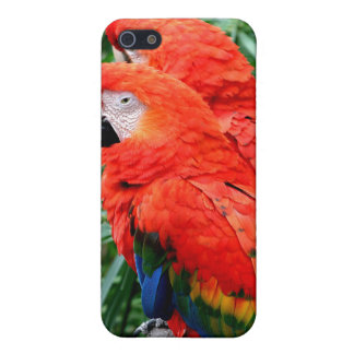 Scalet Macaw Cases For iPhone 5