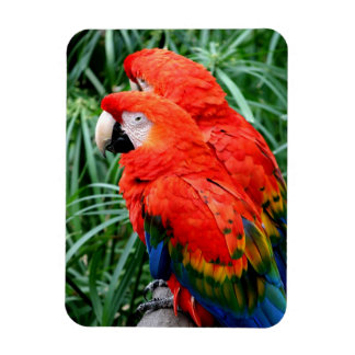 Scalet Macaw Magnet