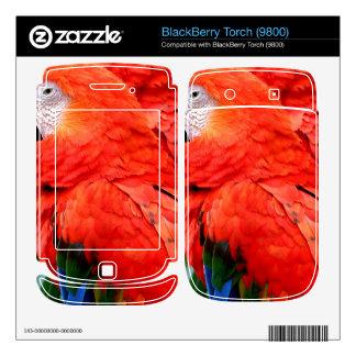 Scalet Macaw BlackBerry Skin