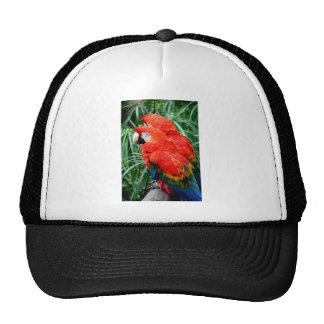 Scalet Macaw Trucker Hat