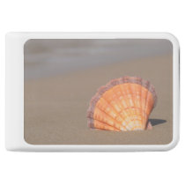 Scallop Shell| Crete, Greece Power Bank