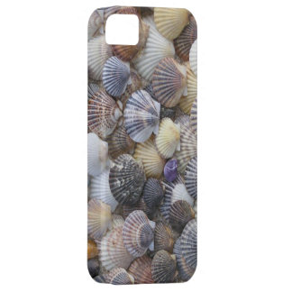 Scallop Shell iPhone5 Case