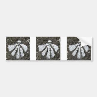 Scallop Shells Bumper Sticker