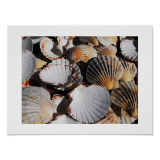 Scallop shells poster