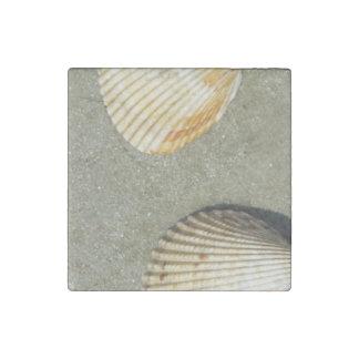 Scallop Shells Stone Magnet