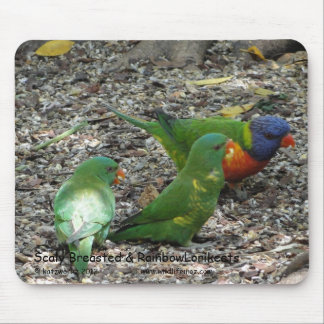 Scaly Breasted & Rainbow Lorikeets Mouse Pad