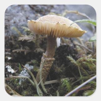 Scaly Mushroom Photo Square Sticker