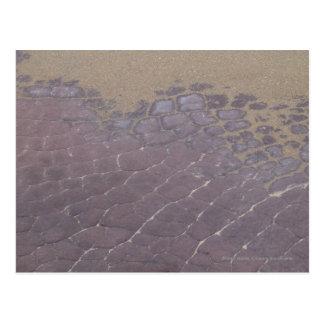 Scaly Rocks Postcard