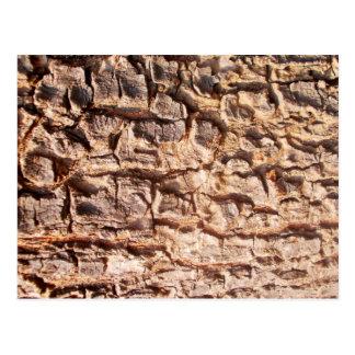 Scaly Tree Bark Postcard