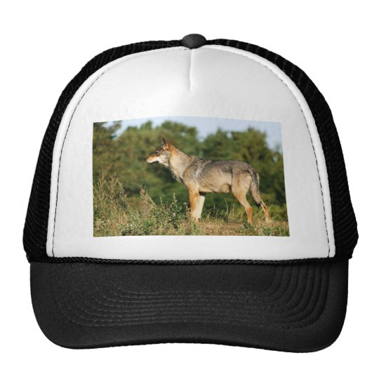 Scandinavian grey wolf trucker hat