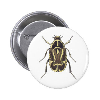 Scarab Beetle Pinback Buttons