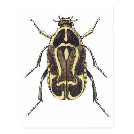 Scarab Beetle Post Card