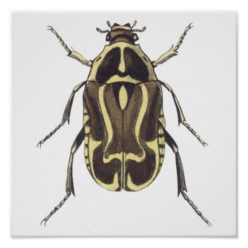 Scarab Beetle Poster