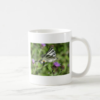 Scarce Swallowtail butterfly feeding on flower Coffee Mug