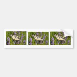 Scarce Swallowtail butterfly on lavender Bumper Sticker