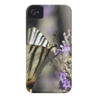 Scarce Swallowtail (Iphiclides podalirius) iPhone 4 Cover